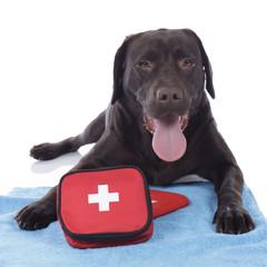 Hund mit Erste Hilfe Set