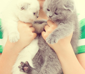 two kittens in children's hands