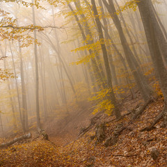 Landscape in wild autumnal foggy forest