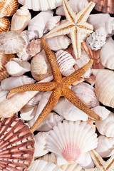 background of  various seashells and  starfishes