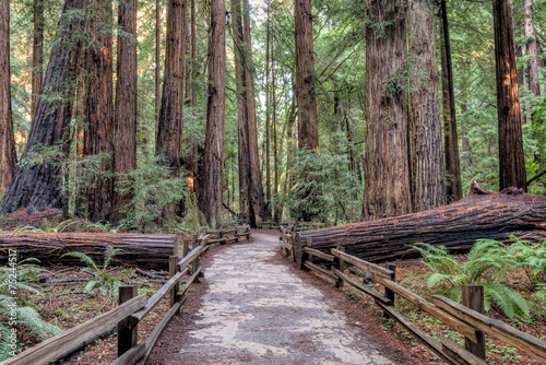 Muir Woods National Monument Hiking Path