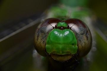 Olho de libélula