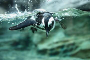潜るペンギン