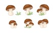 Mushrooms set - 75255170