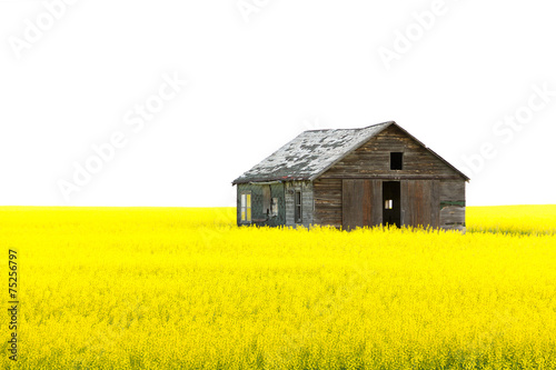 Leinwandbild Motiv Old wooden abandoned house on the yellow field isolated