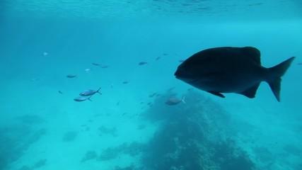 Underwater footage of sea life. Red Sea, Egypt