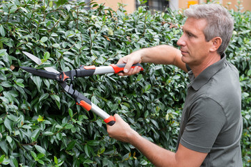 Gardener Cutting Hedge With Pincer
