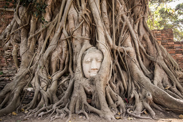 Head of Sandstone Buddha in Tree Roots at  Ayutthaya, Thailand
