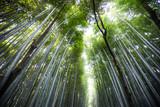 Fototapeta Arashiyama