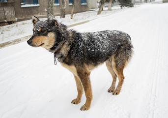 Hungry stray dog during a snowstorm