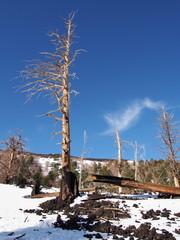 albero e lava etna
