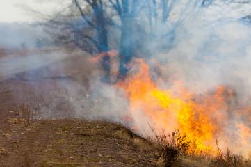 burning reeds. fire