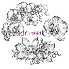sketch style black orchid