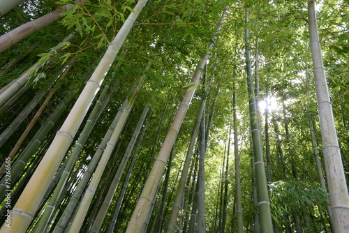 In de dag Bamboo forêt de bambous