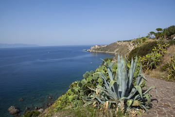 Milazzo. sea and agave
