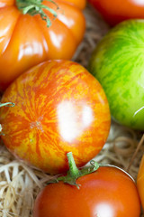 Assortment of different cultivars of fresh tomatoes