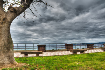 benches and tree by the shore