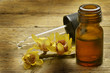 Leinwanddruck Bild - Chimonanthus Calicanto Wintersweet Chimonanthe précoce