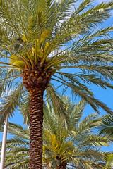 Beautiful palm trees under a blue sky.