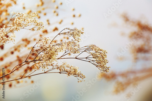 Dried flowers background - 75283779