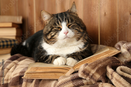 Papiers peints Chat Cute cat lying with book on plaid