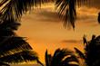 cadre de cocotiers sur fond de coucher de soleil