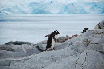 走るペンギン