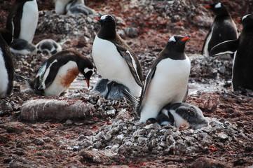 ペンギンの子育て
