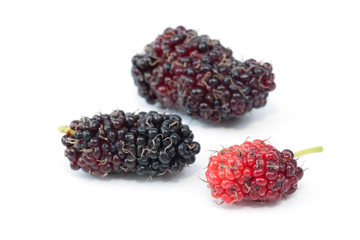Mulberry fruit on the white background