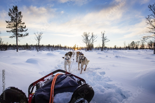 Dog sledding with huskies in beautiful sunset - 75290981