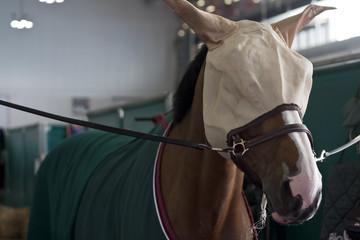 cavallo cuffia