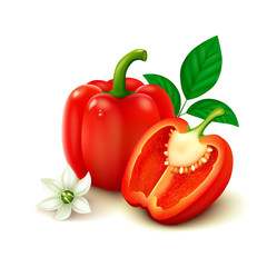 Red bell pepper (bulgarian pepper) isolated on white background