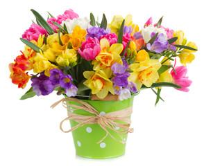 freesia and daffodil  flowers