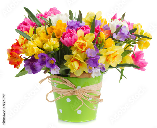 Staande foto Narcis freesia and daffodil flowers