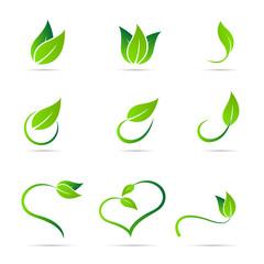 Ecology leaf