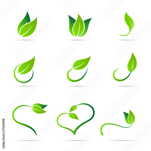 Ecology leaf - 75296918