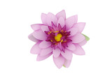Beautiful purple lotus on white background