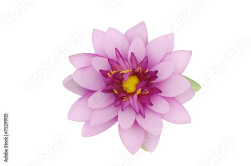 Deurstickers Lotusbloem Beautiful purple lotus on white background