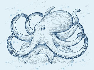 Angry octopus on the rock, sketch style illustration