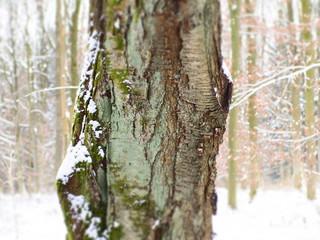 Winterliche Waldlandschaft