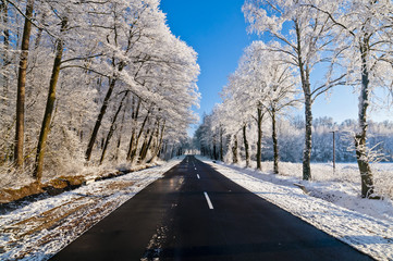 Winter road, driving through snowy forest