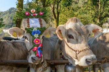 Mucche floreali 2