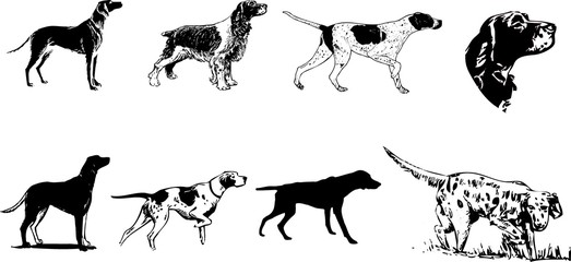 set of hunting dogs