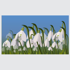 spring flower.snowdrop. vector illustartion