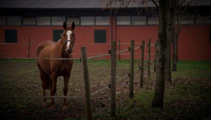 il cavallo ed il maneggio