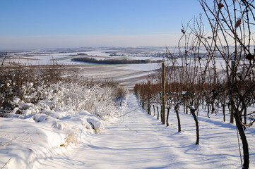 The vineyard in winter. Germany