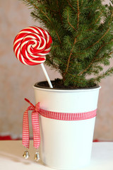 cute christmas still life with pine pot tree