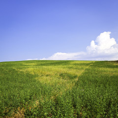 Hill with meadow and blue sky. Color image