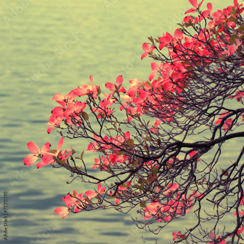 Magnolia branch on lake background. © Inna Felker