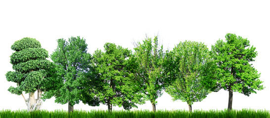 Many green trees isolated on white, Green forest
